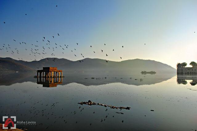 India landscape flock of birds copyright Aloha Lavina
