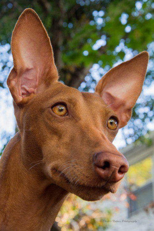 He's All Ears, My Qallin