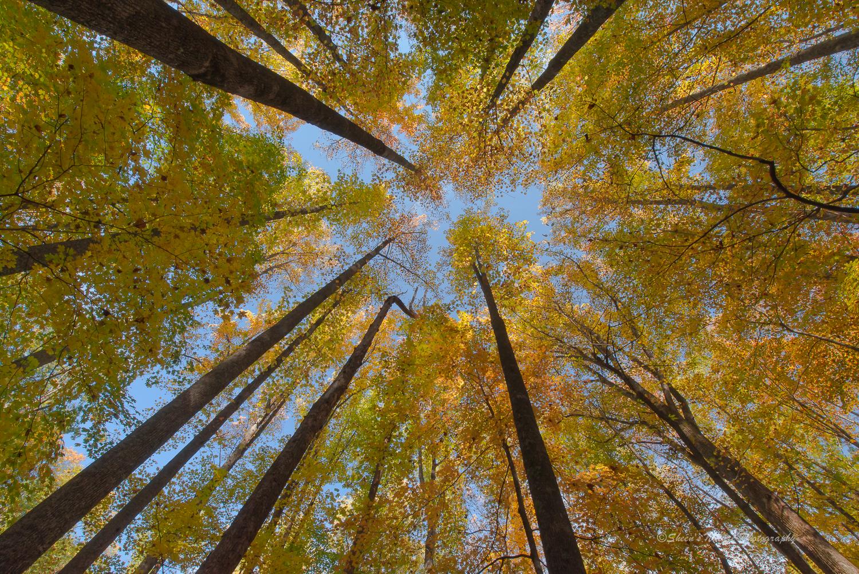 Fall Kaleidoscope by ©Sheen's Nature Photography