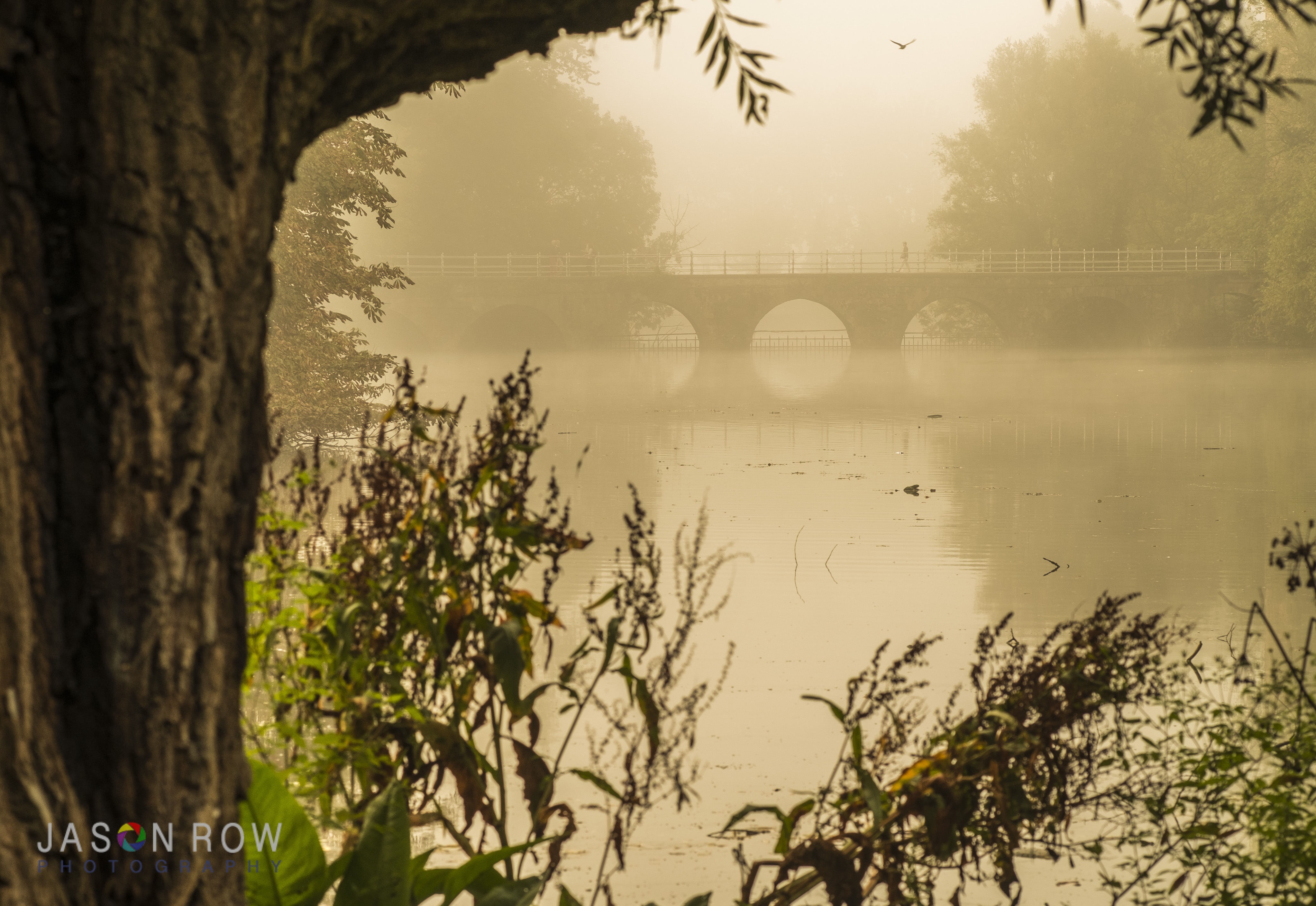 A tree as a frame on a misty morning in Bruges. By Jason Row Photography