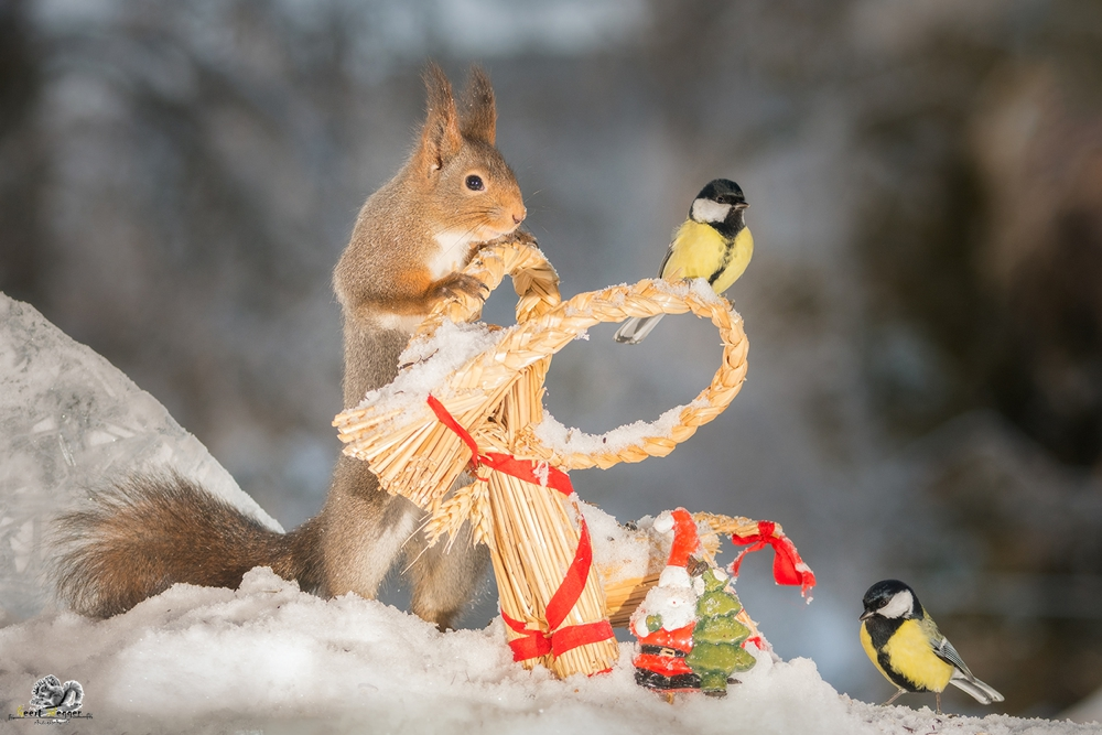 red squirrel and titmouse with a santa and christmas object in snow