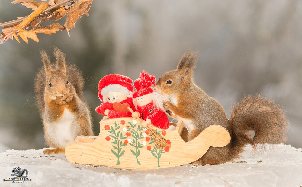 red squirrels with a sleigh with christmas dolls standing on ice