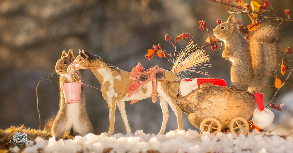 red squirrels on a horse and in wagon with snow