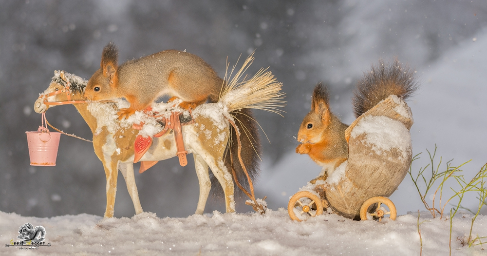red squirrels on a horse and in wagon while it is snowing
