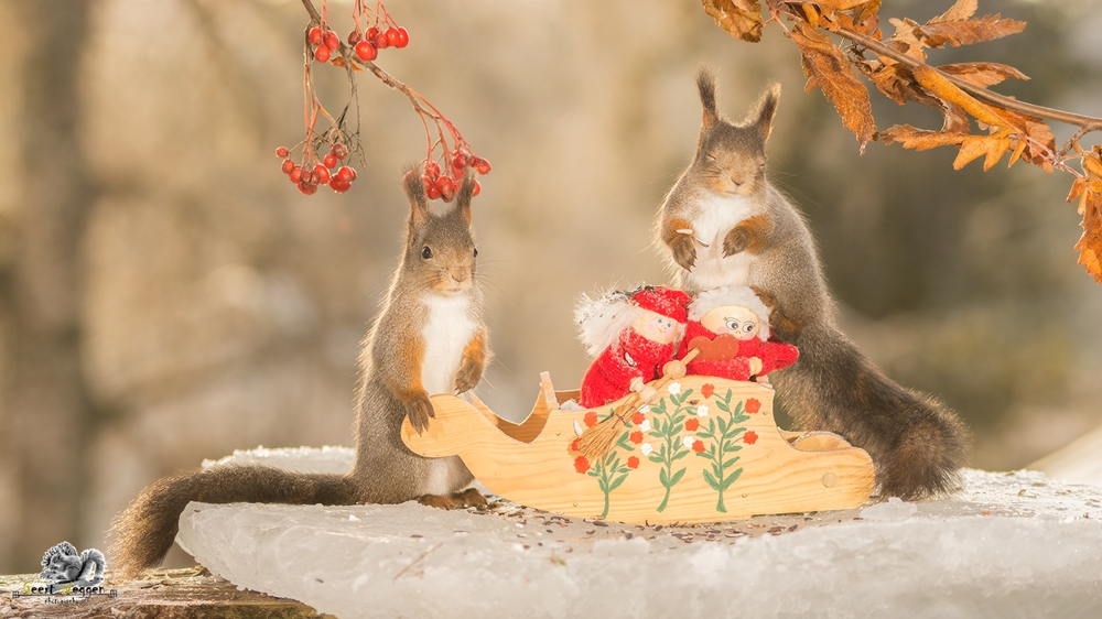 red squirrels with sled and santas on ice