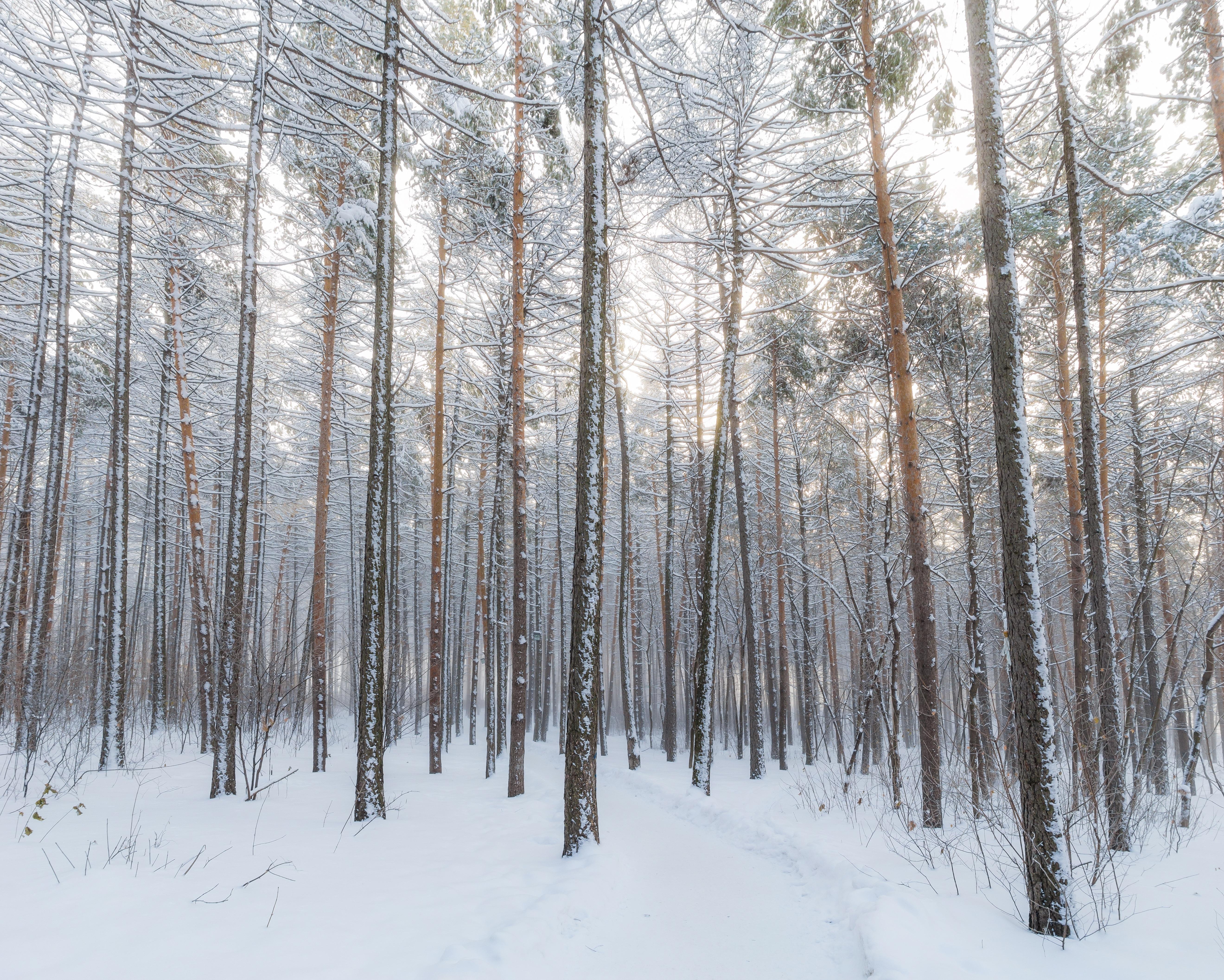 photo: michail prohorov