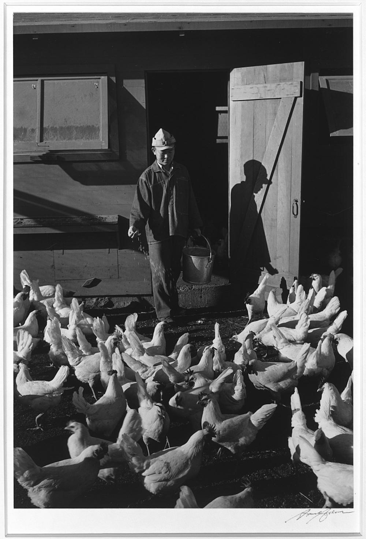 Poultry farm, Mori Nakashima, Manzanar Relocation Center