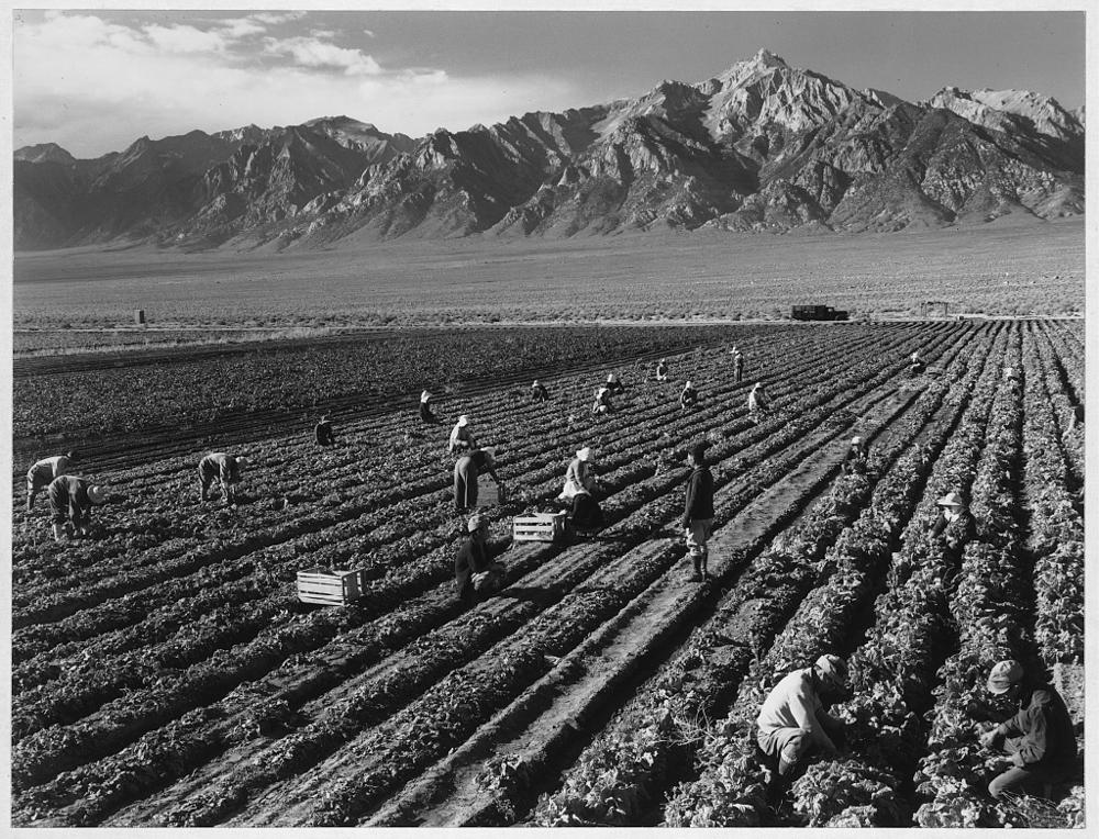 Farm, farm workers, Mt. Williamson in background, Manzanar Relocation Center, California