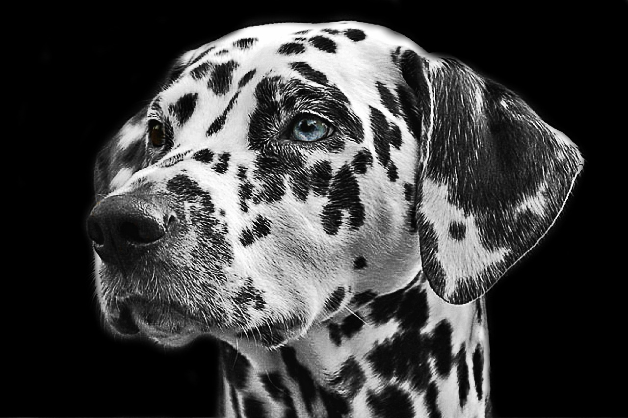 how to photograph your pets