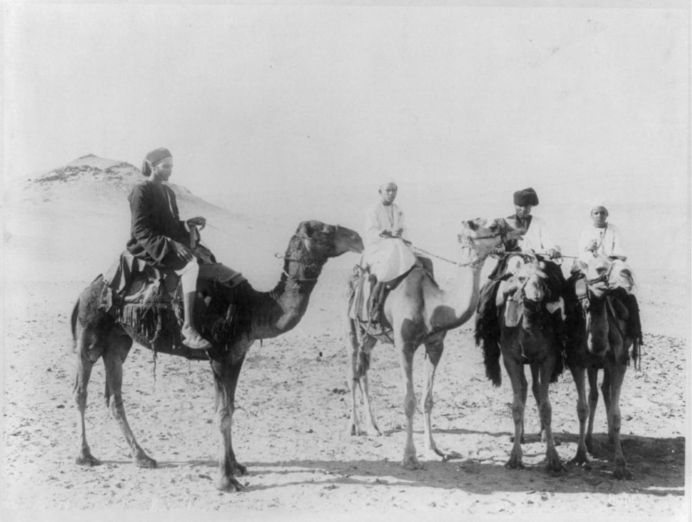 Camel drivers
