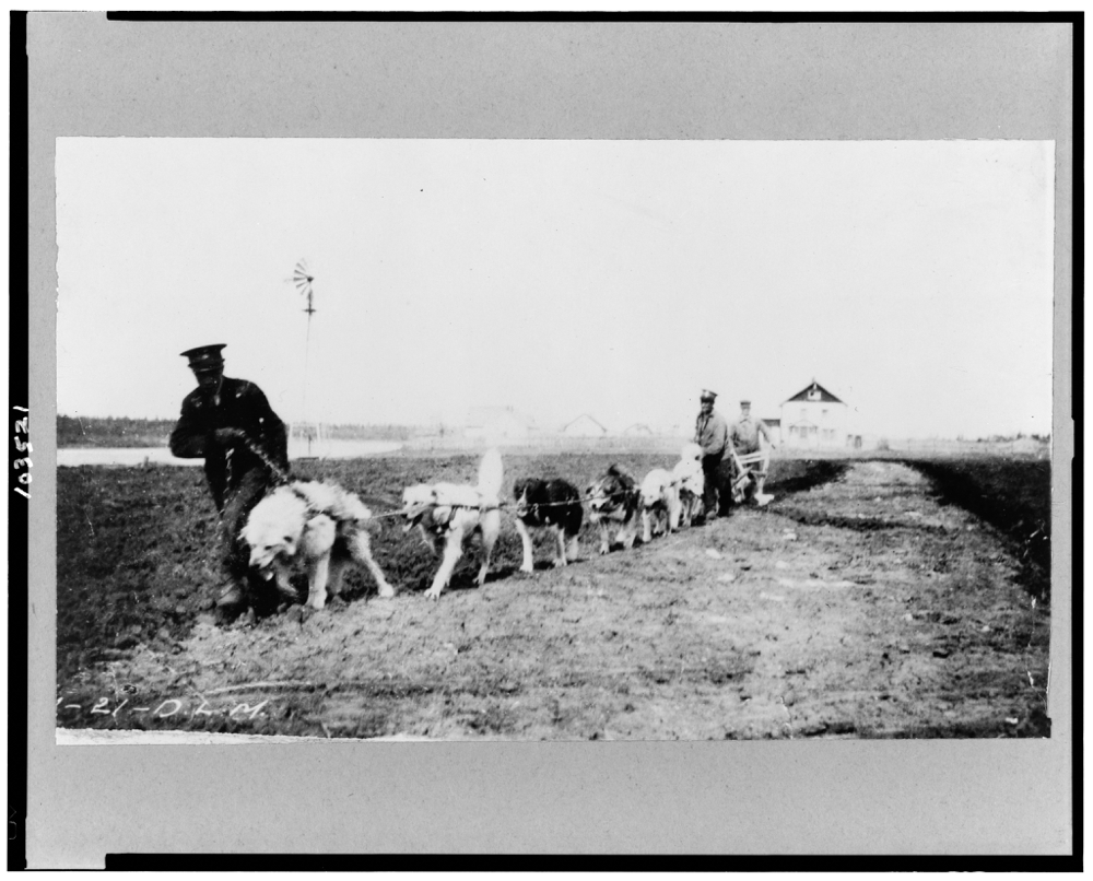 Dogs being used to plow, Hay River, Northwest Territories, Canada