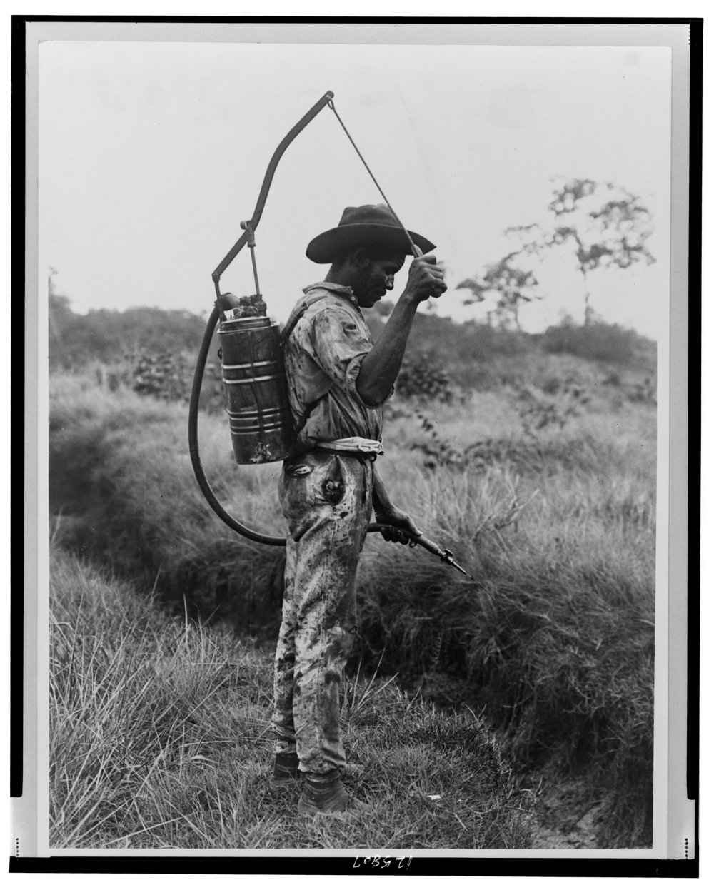 Panama--Spraying oil on breeding places of mosquitoes