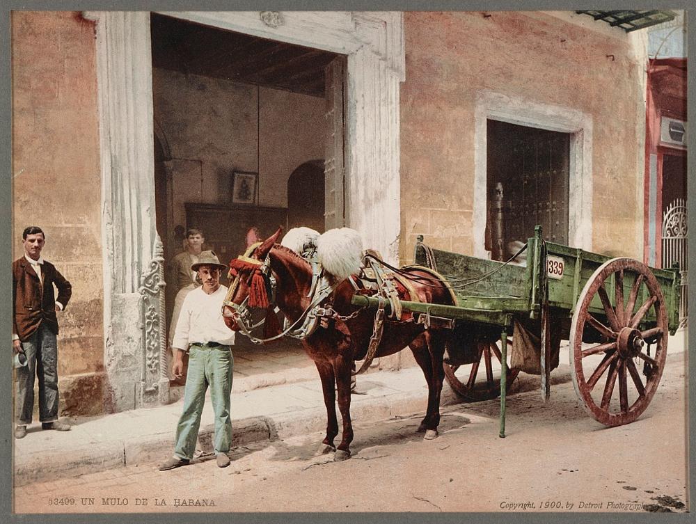 Un Mulo de la Habana
