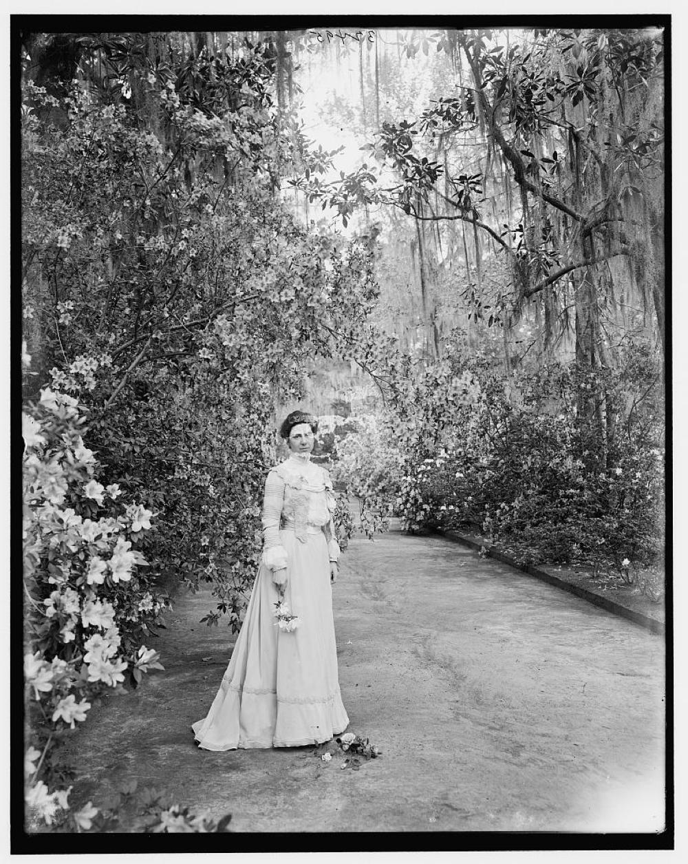 Woman near flowering shrub at Magnolia Gardens, Charleston, S.C