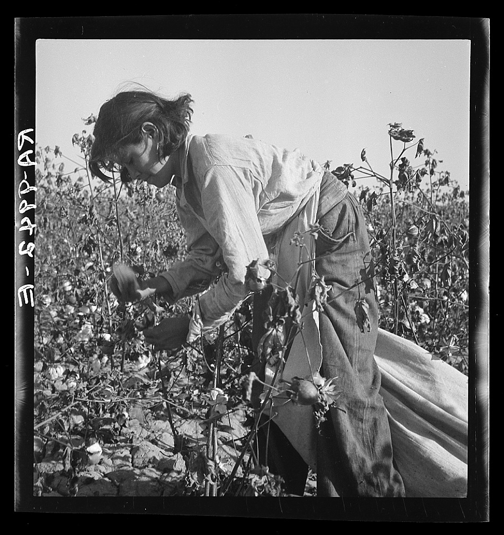 Cotton picker. Southern San Joaquin Valley