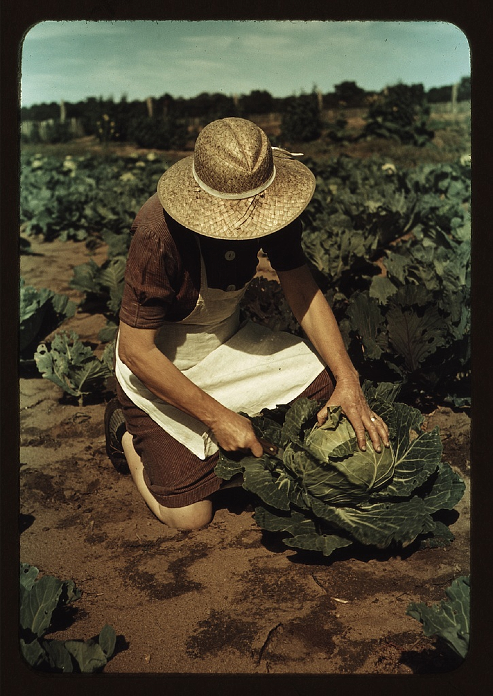 Mrs. Norris with homegrown cabbage