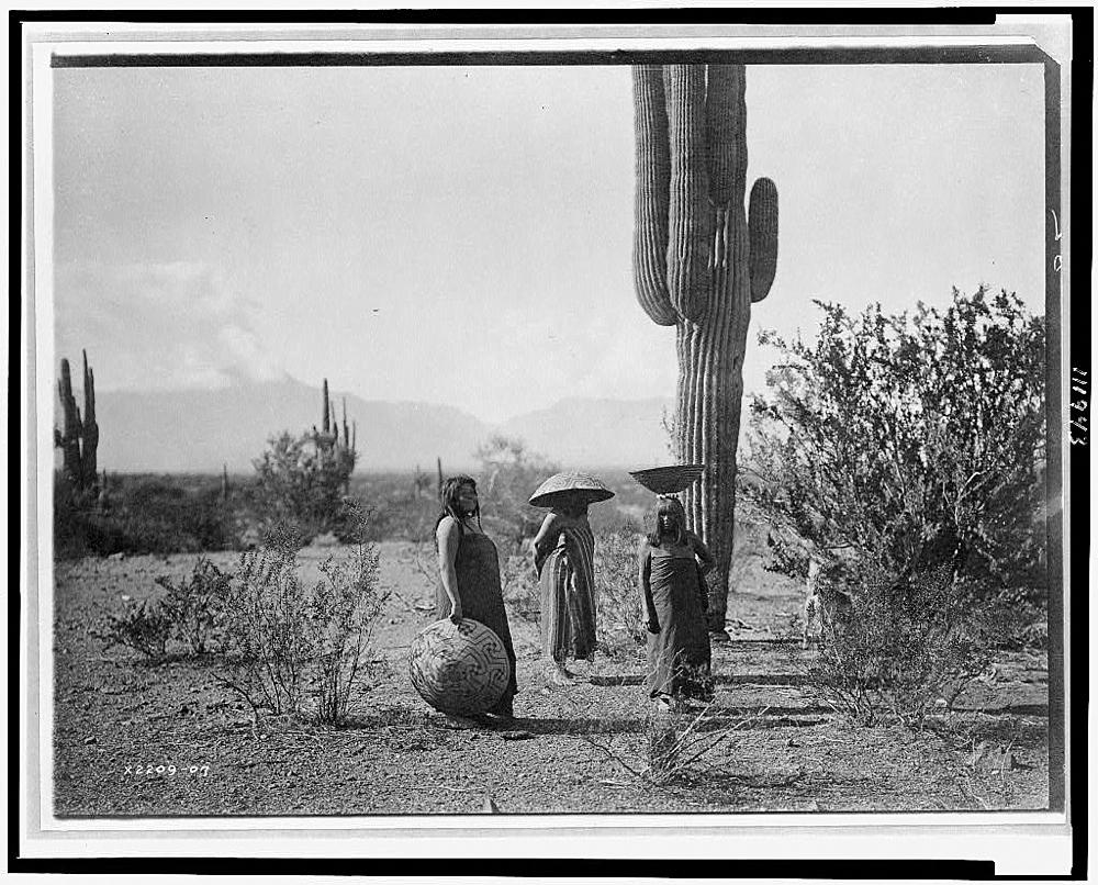 [Saguaro fruit gatherers--Maricopa]