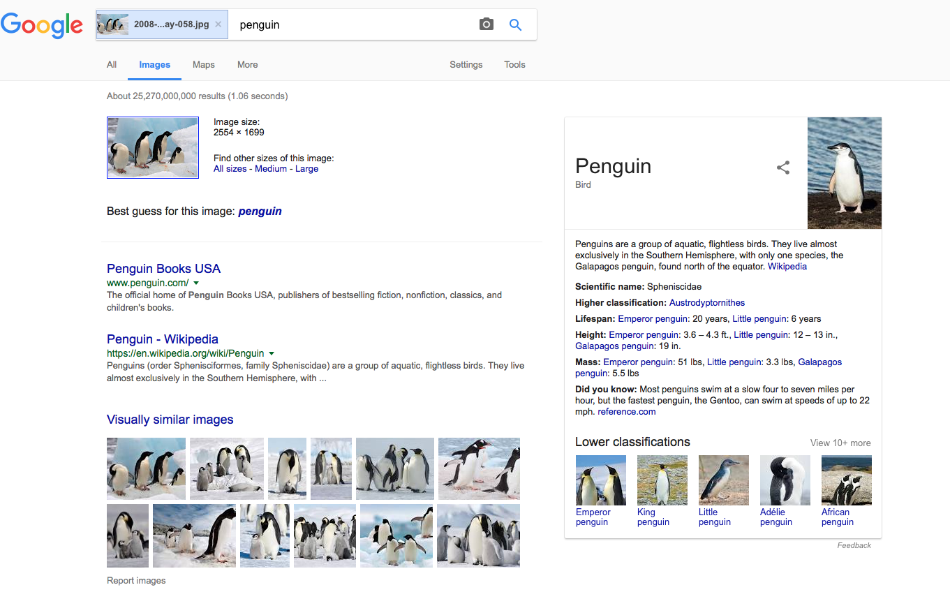 Google provides a guide to identifying different penguins when you image search