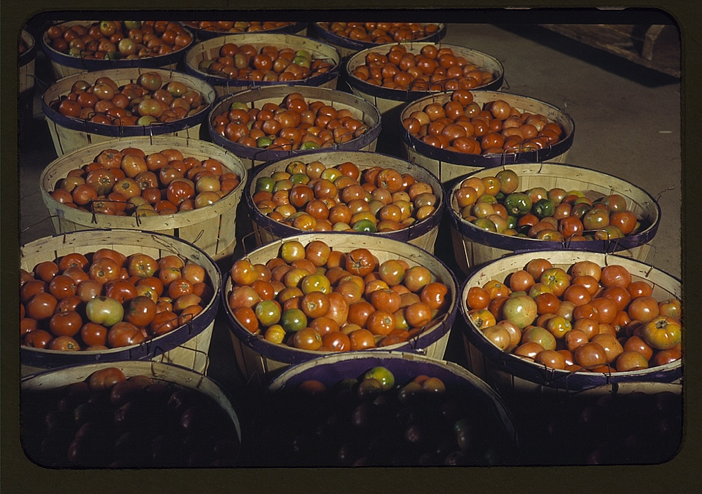 Tomatoes at the Yauco Cooperative Growers' Association