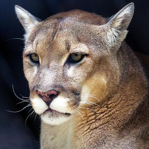 An Elegant Predator