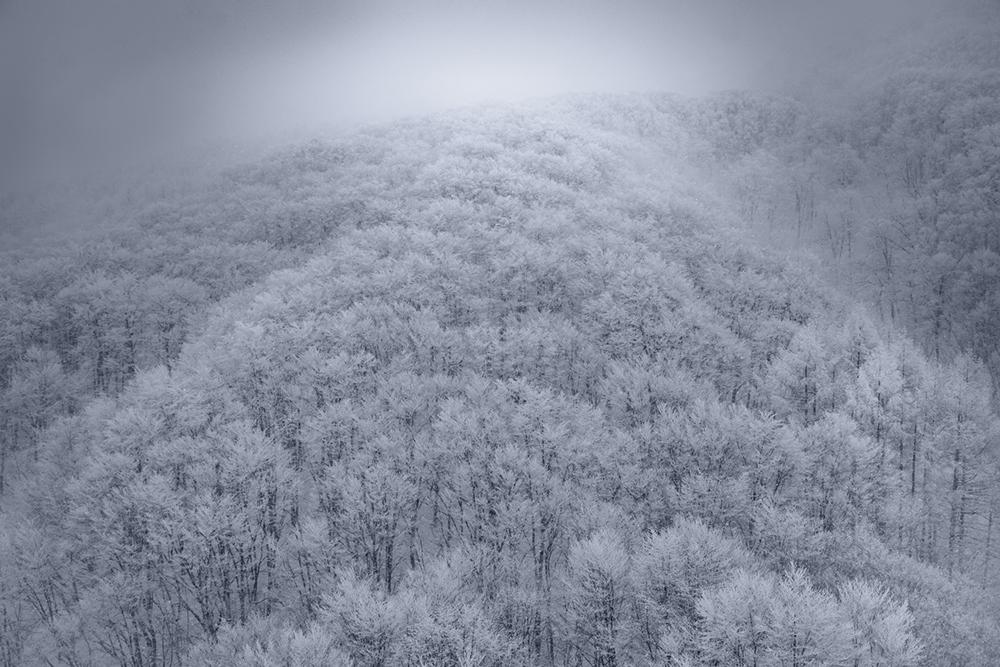 Fairy Forest I, Zao Onsen, Japan