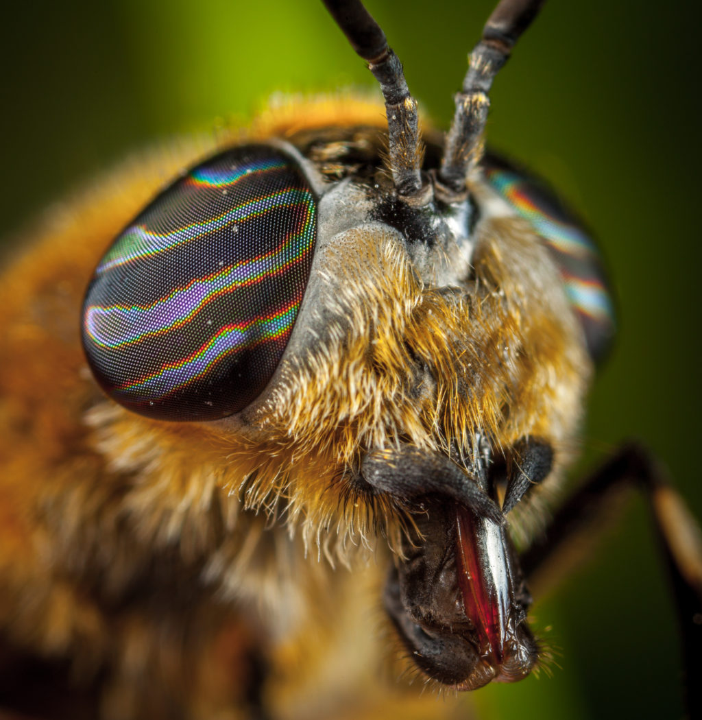 33 Beautiful Photographs Of Busy Bees | Light Stalking