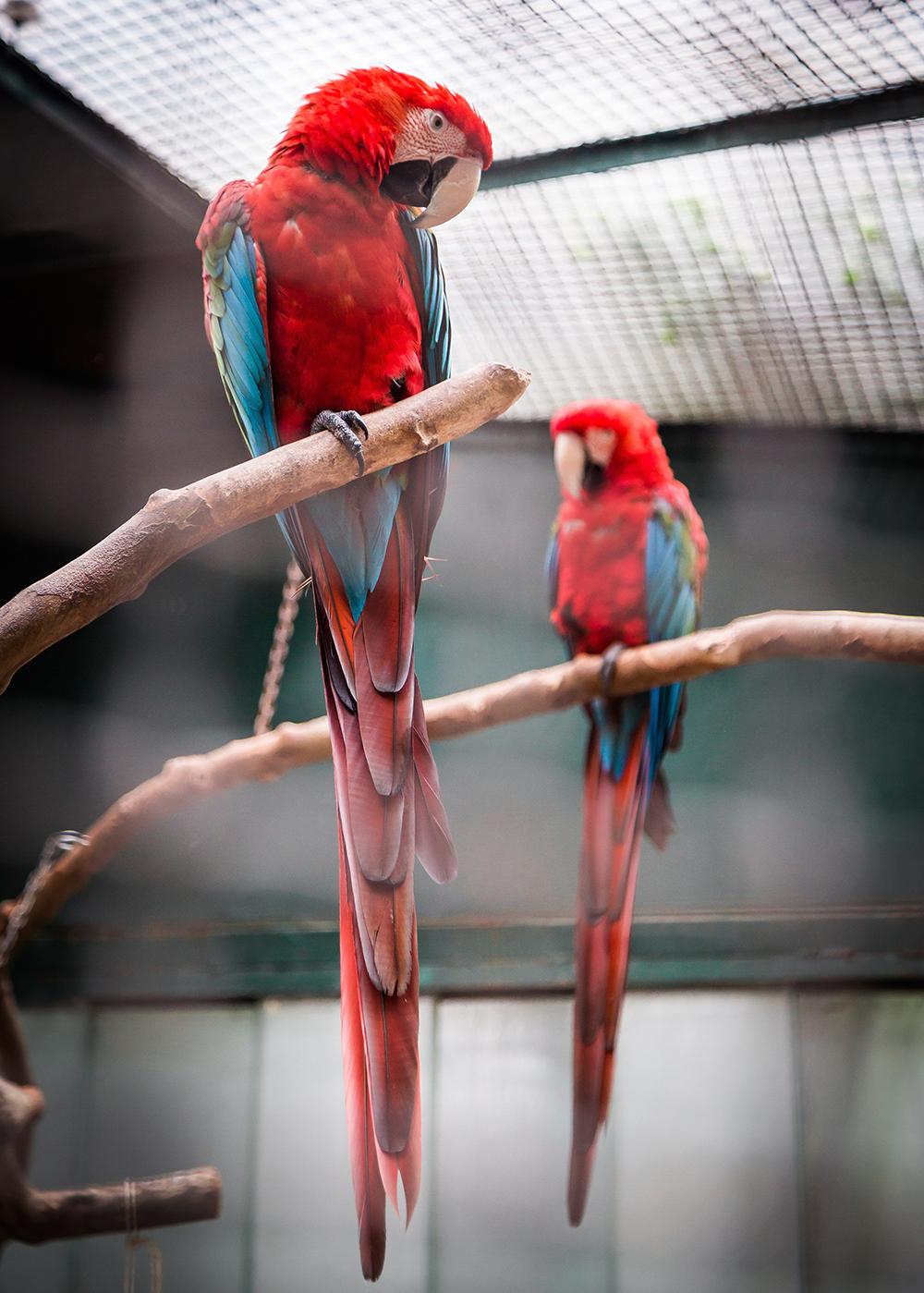 Lisbon Zoo, Lisboa, Portugal