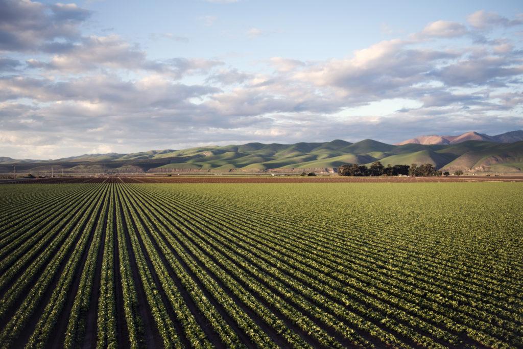 fields on farm