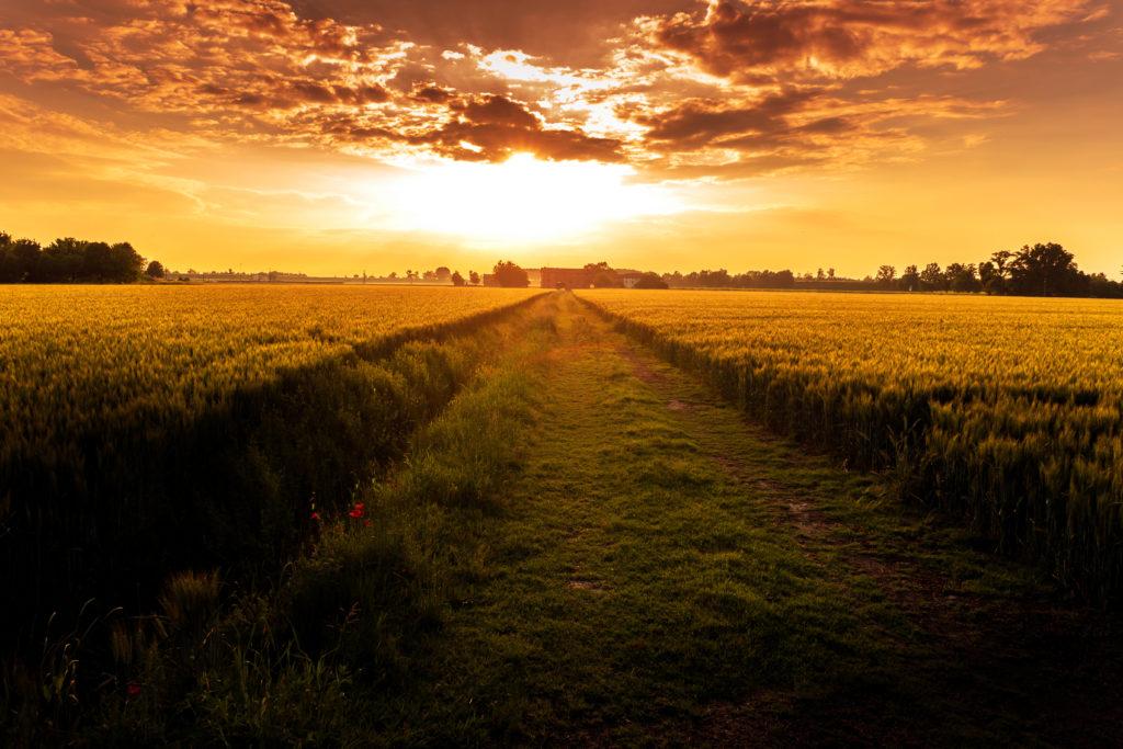 sunset field path