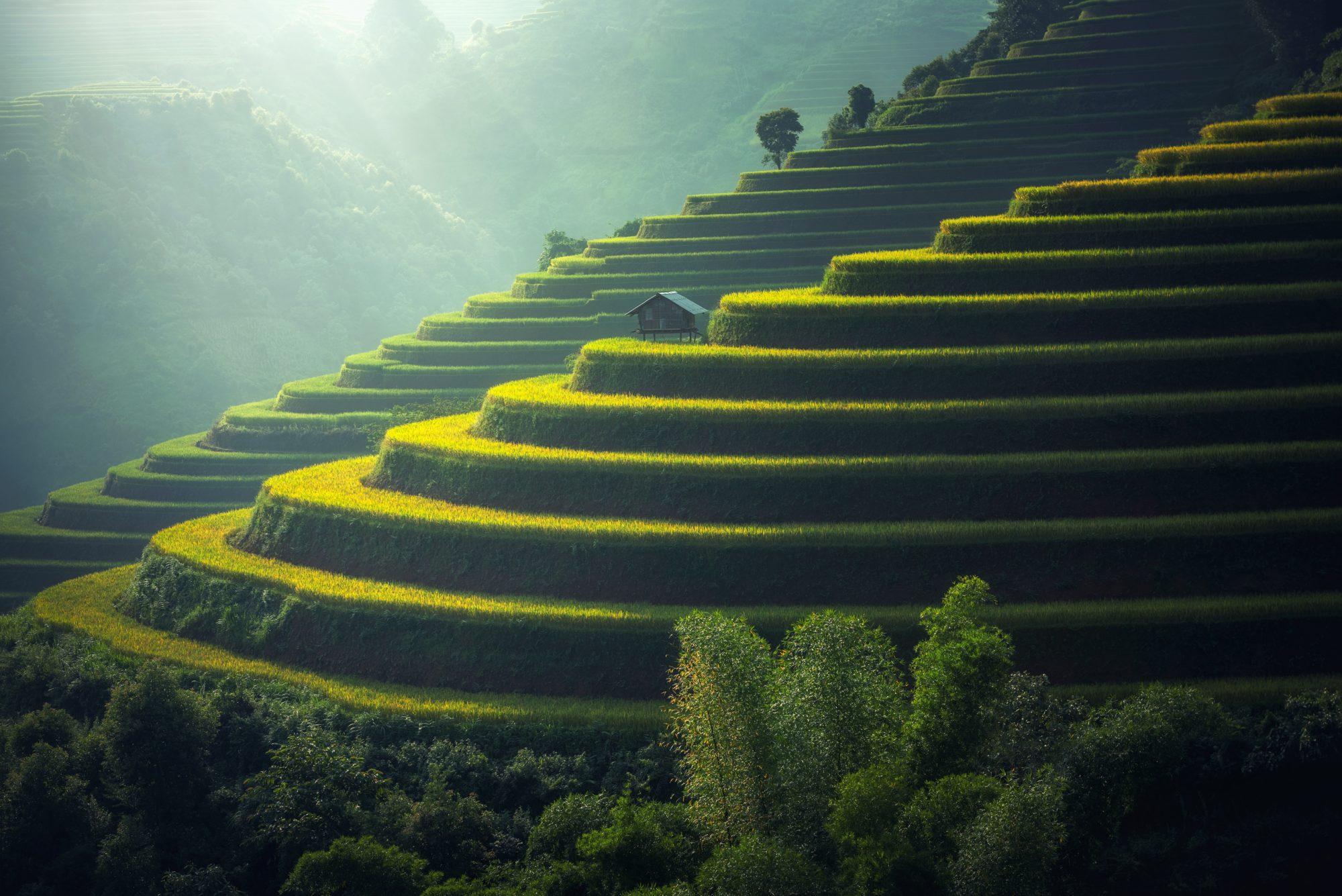 rice paddy scenic landscape photography